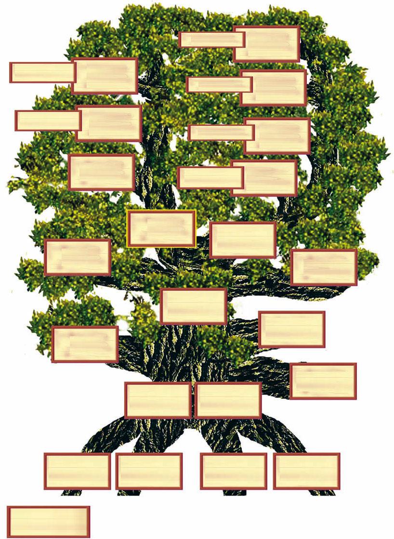 Vorlage Ahnenbaum Ahnenforschung Stammbaum Basteln Muster