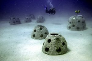 Korallenbestattung Korallenriff Bestattung Eternal Reef